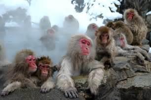 地獄谷の猿 画像 に対する画像結果