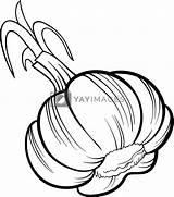Garlic Cartoon Legume Desen Vegetable Usturoi Coloring Colorat Mewarnai Colorear Alb Negru Dibujos Gambar Animat Ajo Colorare Libro Yayimages Imagine sketch template