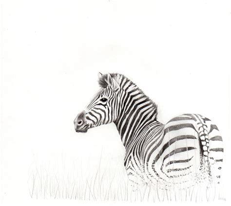 Simple Zebra Sketch Wwwimgkidcom The Image Kid Has It