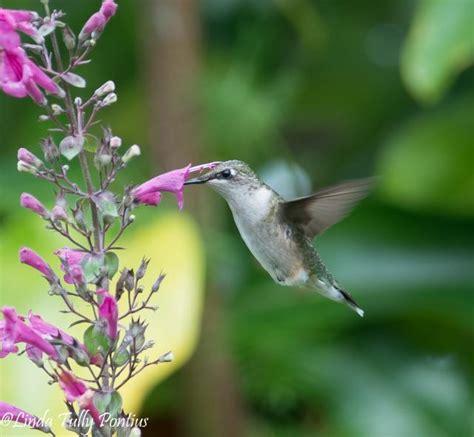 hummingbird nectar sources late summerfall