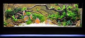 Liter Berechnen Aquarium : aquascaping projekte und referenzen ~ Themetempest.com Abrechnung