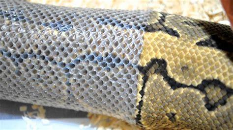 python shedding