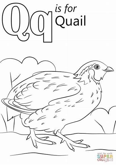 Letter Coloring Pages Quail Alphabet Quilt Printable
