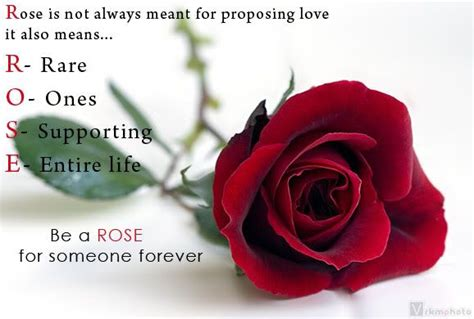 images  roses  quotes meaning  rose roses