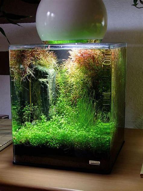 Cube Aquarium Aquascape by 111 Best Images About Cube Aquascape Ideas On