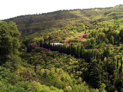 Botanischer Garten Tiflis by National Botanical Garden Of