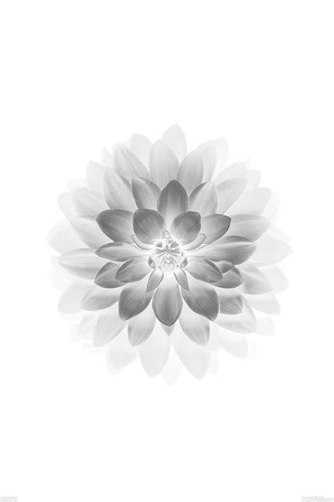 White Wallpaper Iphone 8 Plus by Ad78 Apple White Lotus Iphone6 Plus Ios8 Flower Papers Co