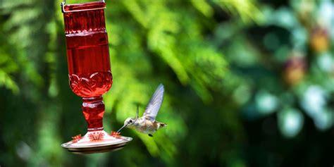 hummingbird feeders   unique hummingbird
