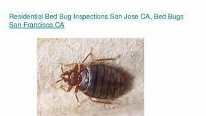 bug exterminator san francisco ca With bed bugs san jose