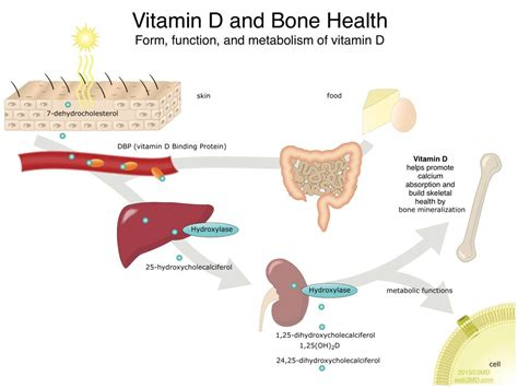 Jaw Bone Health In Ventura, Ca  Oral Health & Jaw Bone