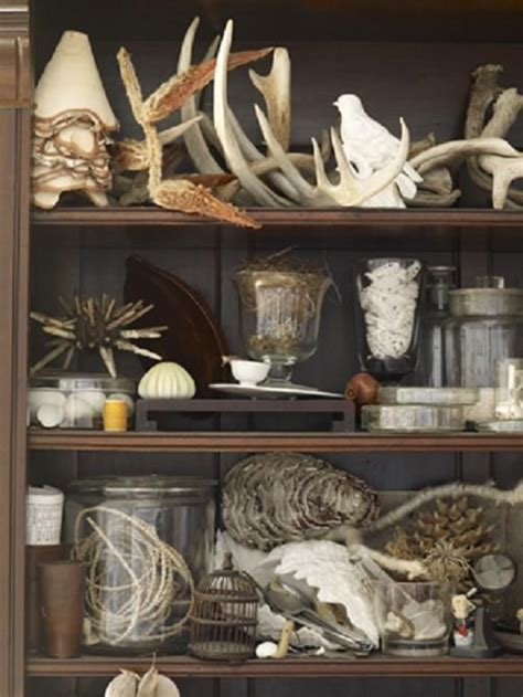 Cabinets De Curiosité by 1000 Images About Cabinets And Items Of Curiosity On