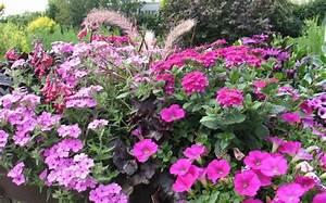Sommerblumen Für Schatten : pflanzen f r halbschatten pflanzen f r schatten ~ Michelbontemps.com Haus und Dekorationen