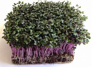 Sow Chart Microgreens Growing Guide Homesteading Simple Self