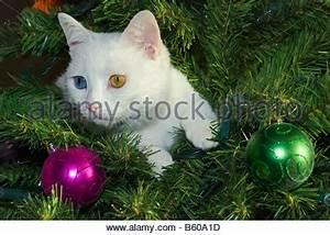Weihnachtsbaum Mit Rosa Kugeln : rosa und lila weihnachtskugeln im schnee mit lametta ~ Orissabook.com Haus und Dekorationen