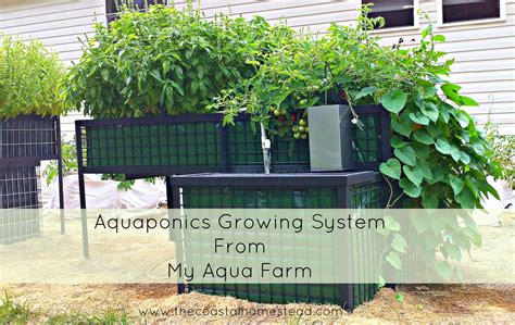 Aquaponics Magazine Aquaponicsgrants
