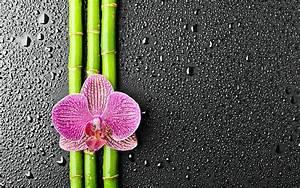 Bamboo Wallpaper HD 42173 2560x1600 px ~ HDWallSource.com