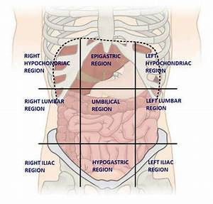 What Organs Are Found In The Right Lumbar Region