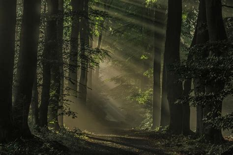 nature landscape mist sunrise forest dark path sun