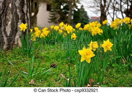 tromboni fiori giardino fulda tromboni germania giallo hessen fiori