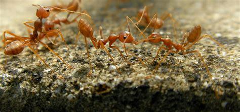 antscom  authority  ants antscom