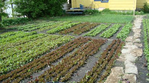 Farming In Your Backyard by Farming Alleviating The World S Food Dilemma One
