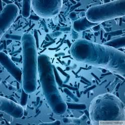 Good Bacteria Images Under Microscope