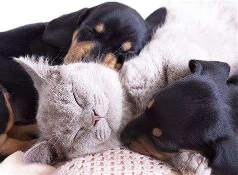 Katzen Halten Ausstattung by Ist Katzenhaltung Einfacher Als Hundehaltung Zooroyal