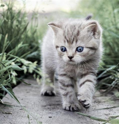 Search For Katz kleine katze