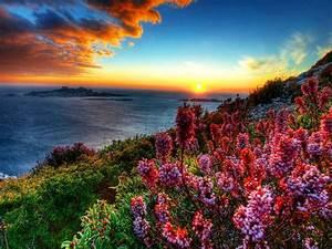 Coastal, Flowers, At, Sunset, Hd, Wallpaper, 604545