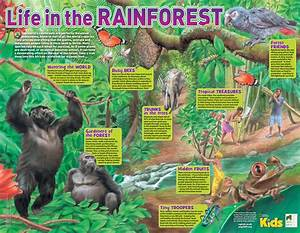 Rainforest clipart physical geography - Pencil and in ...