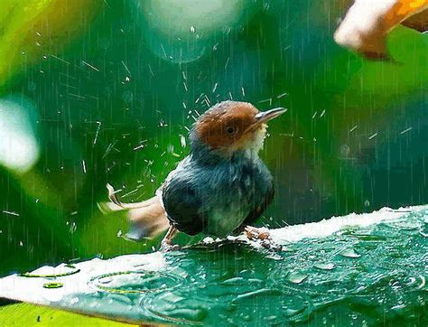 Beautiful Bird in Rain