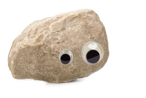 Thanks For The Pet Rock
