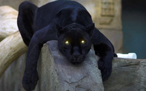 Panther Wallpapers Best
