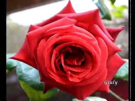 ditelo  le rose rosse amore passionale youtube