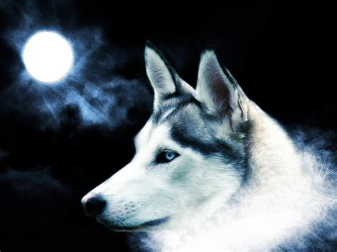 3d Wallpapers Wolf by 3d Wolf Wallpapers Free Yahoo Tv
