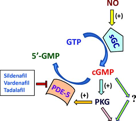 evidence for pleiotropic effects of phosphodiesterase 5 pde5 inhibitors emerging concepts in