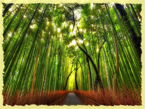 pictures of bamboo trees lessons from the beatles and bamboo trees suntara daniel coates
