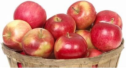 Apple Apples Hendersonville Festival Fresh Nc Grab