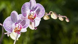 Our 3 favorite orchids to grow indoors - Sunset Magazine