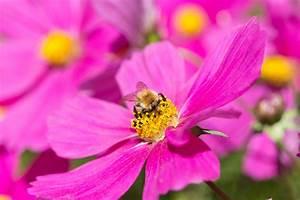 Kleine Fliegen In Blumen : so wird dein garten bienenfreundlich willkommen in ~ Lizthompson.info Haus und Dekorationen