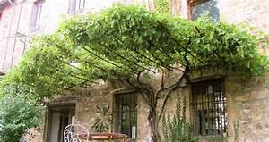 Comment planter une vigne vierge ? Sem jardin