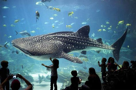 largest aquarium in the us best aquariums in the united states