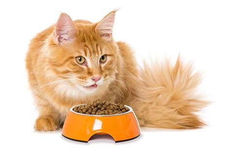Top 10 Best Cat Food For Sensitive Stomach In 2017