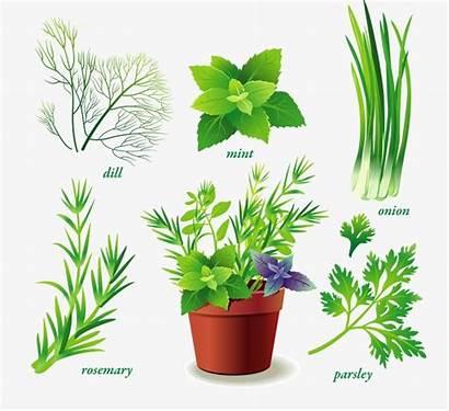 Plantas Ornamentales Variedad Ornamental Planta Pngtree Verdes