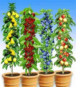 Pflanzen Günstig Kaufen : s ulen obst kollektion 4 pflanzen gartengestaltung greenhouse plants fruit garden und farm ~ A.2002-acura-tl-radio.info Haus und Dekorationen