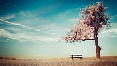 Alone Ground Sky Trees Bench Wallpapers Desktop