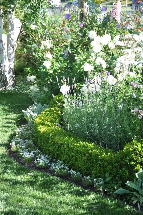 floral hedges gardens hedges and evergreen shrubs on pinterest