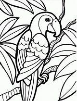 Coloring Parrot Rainforest Print Pages Printable Bird Printables sketch template