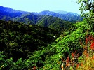Jamaica's Beauty: Blue Mountains | JSC: Jamaicans in ...