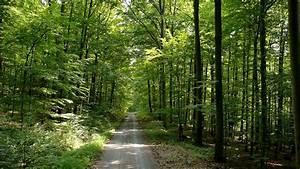 Bilder Vom Wald : die sch nsten bilder w lder in bayern faszination eines lebensraums unter unserem himmel ~ Yasmunasinghe.com Haus und Dekorationen